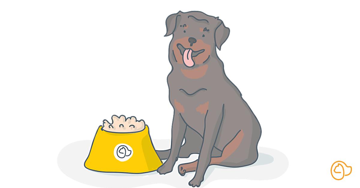 Rottweiler chien