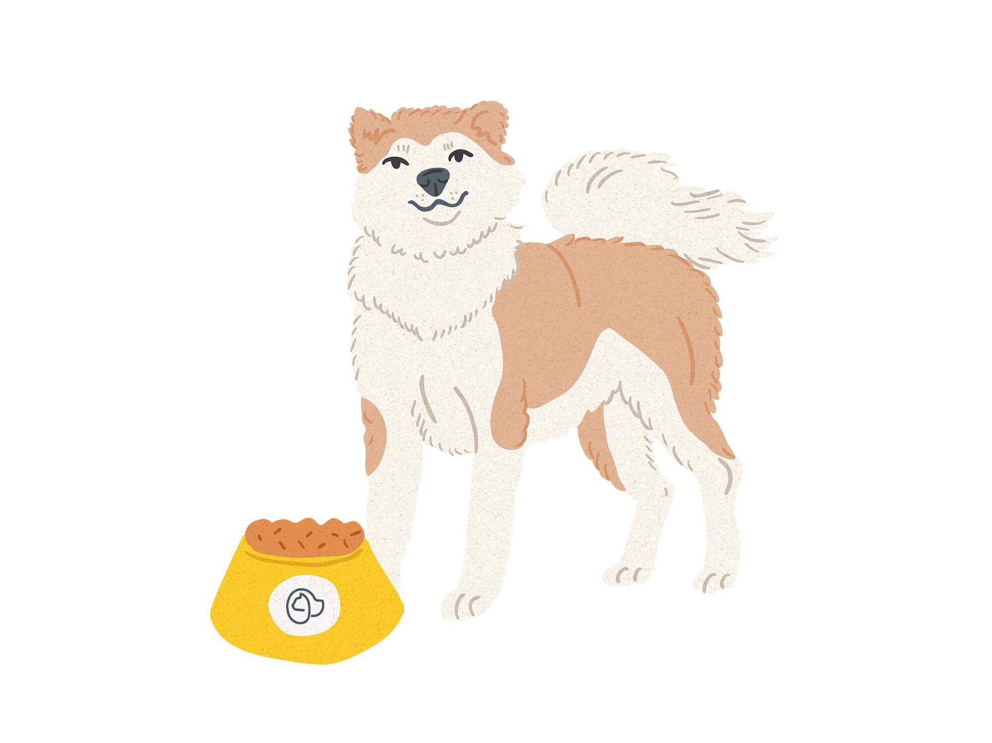 Akita Inu chien
