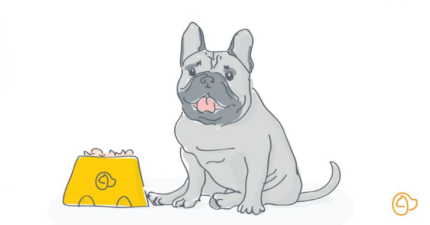 bouledogue français chien