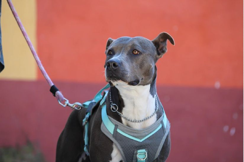 dog-leash