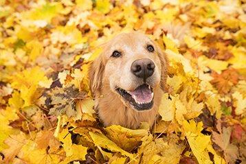 Herbstlaub vom Nachbarn: Wer muss es entsorgen?
