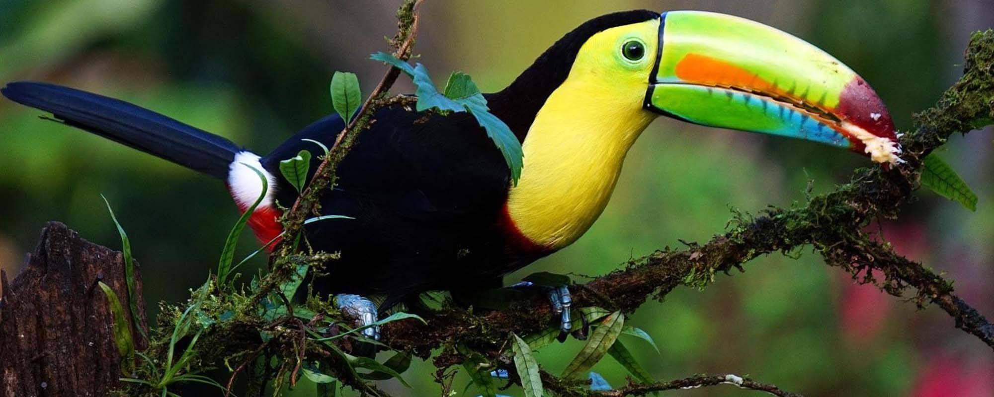 Imparare lo spagnolo in Costa Rica